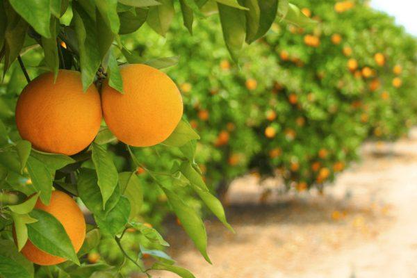 oranges_image